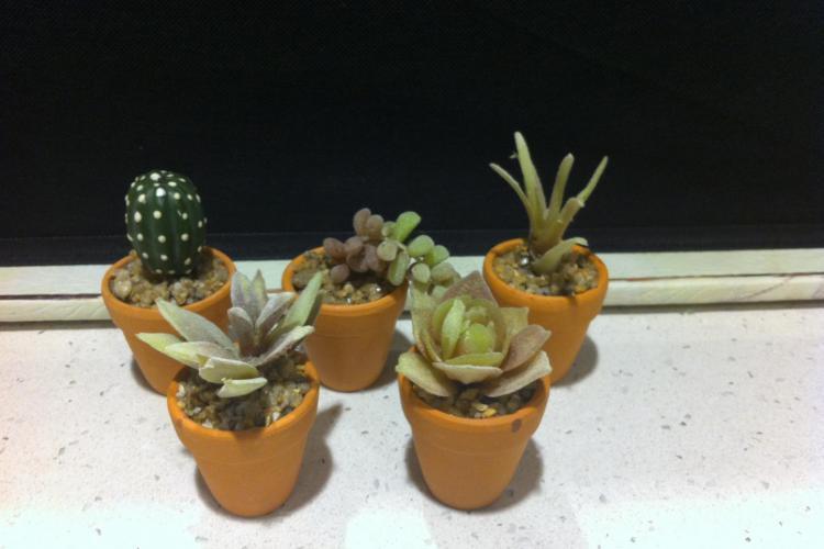 Bomboniere piante grasse finte in vasetti di terracotta - Piante grasse in casa ...