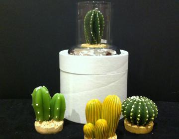 Occasione speciale: porta candele martellato con cactus