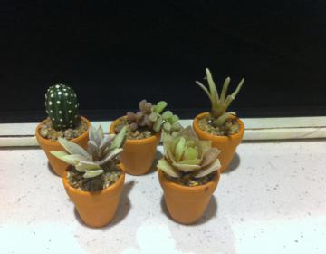 bomboniere: piante grasse finte in vasetti di terracotta
