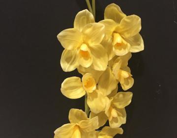 orchidea gialla finta