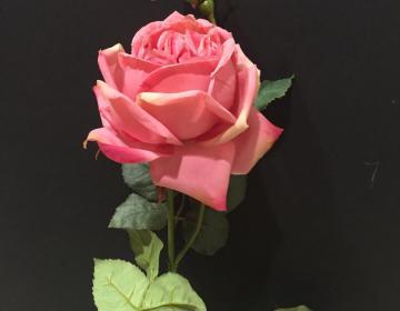 rosa finta rosa